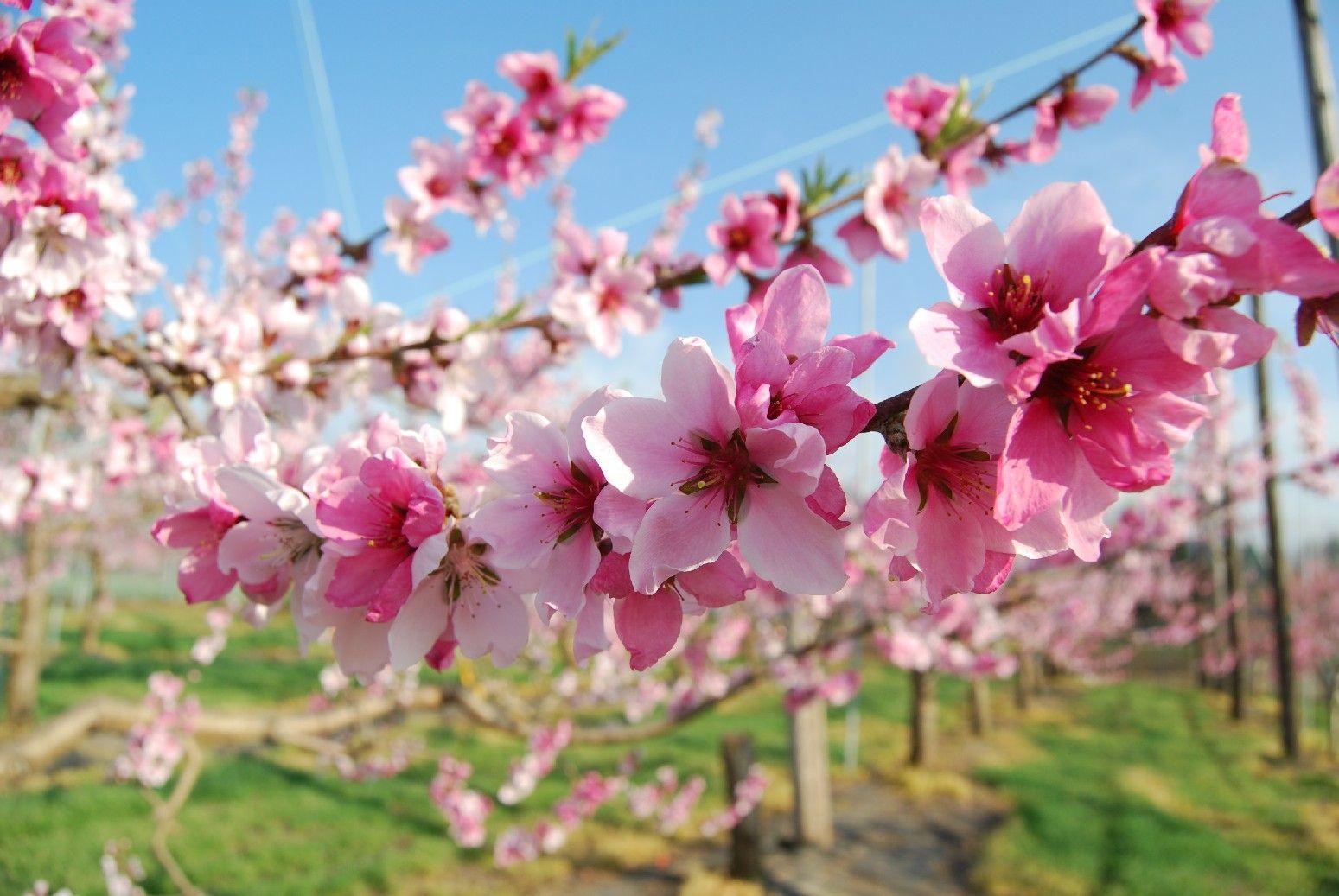 The Language of Japanese Flowers 10 Beautiful Japanese