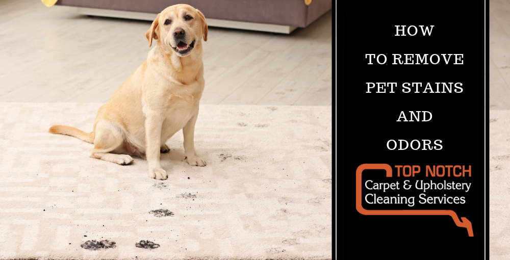Carpet Cleaning Pet Stains And Odor Feels Free To Follow Us In 2020 Carpet Cleaning Pet Stains Remove Pet Stains Pet Stains
