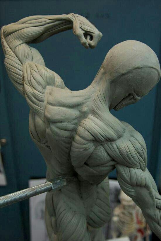 Anatomía espalda   anatomy en 2018   Pinterest   Espalda, Anatomía y ...