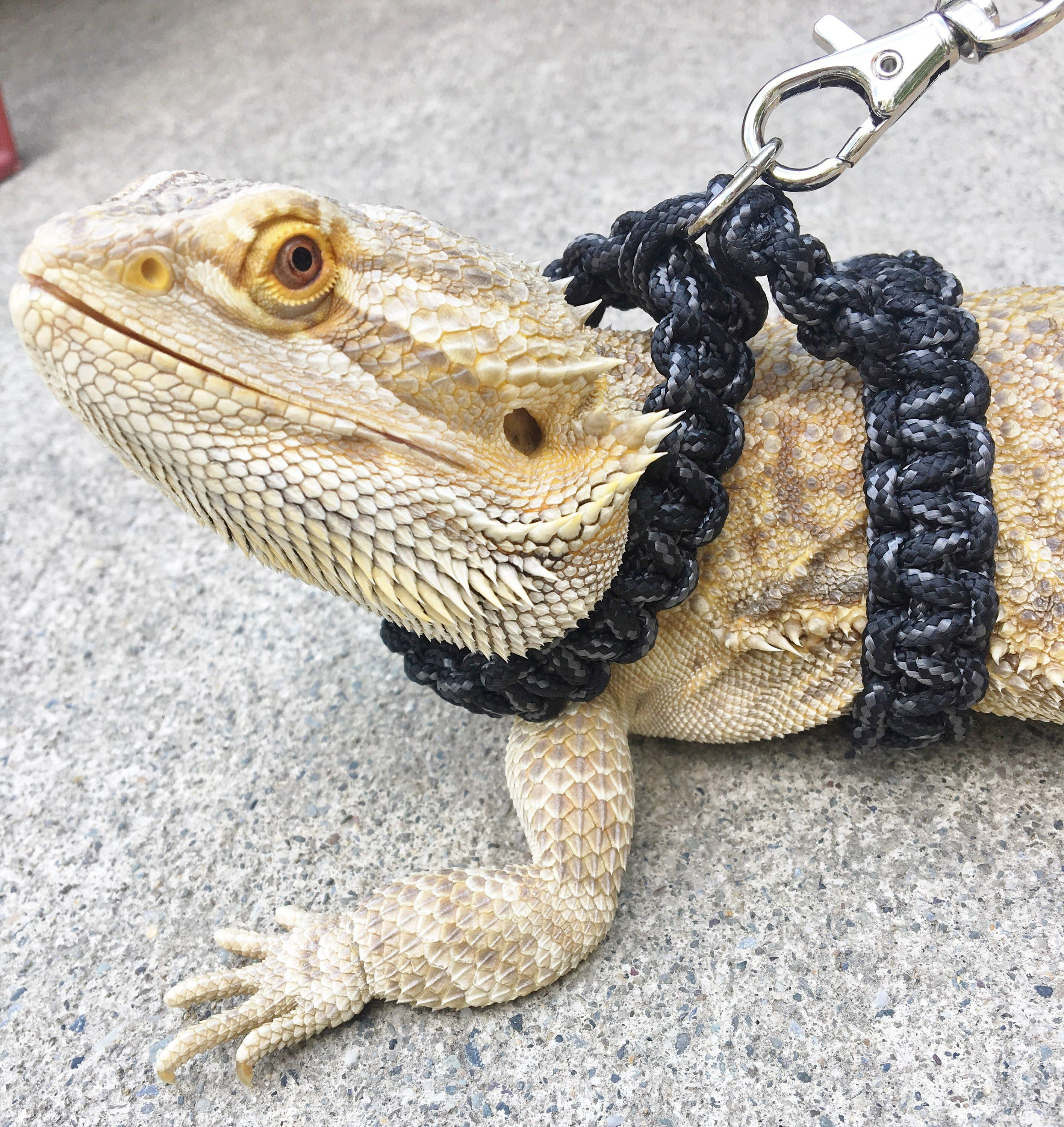 Reptile Harness Bearded Dragon Para Cord Harness Collar And Etsy In 2020 Bearded Dragon Care Baby Bearded Dragon Bearded Dragon