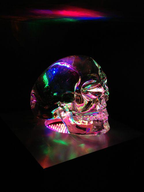 Skull by Todd Diciurcio
