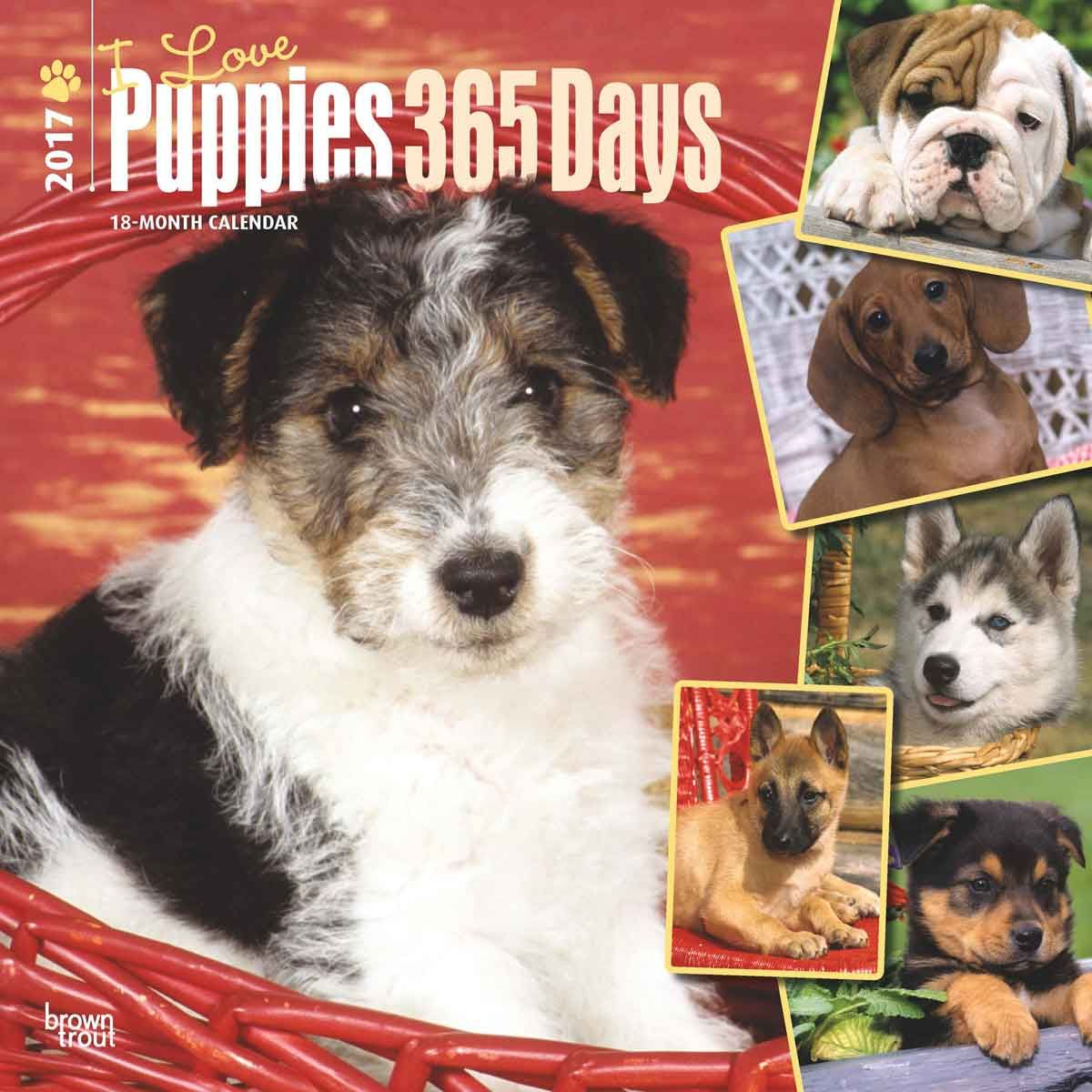 i love puppies 365 days calendar 2017 2017 calendars pinterest