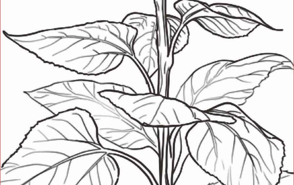 Fantastis 16 Lukisan Bunga Simple Dan Mudah Di 2020 Dengan