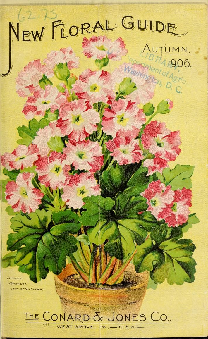 The Conard and Jones Co. - New floral guide : autumn 1906