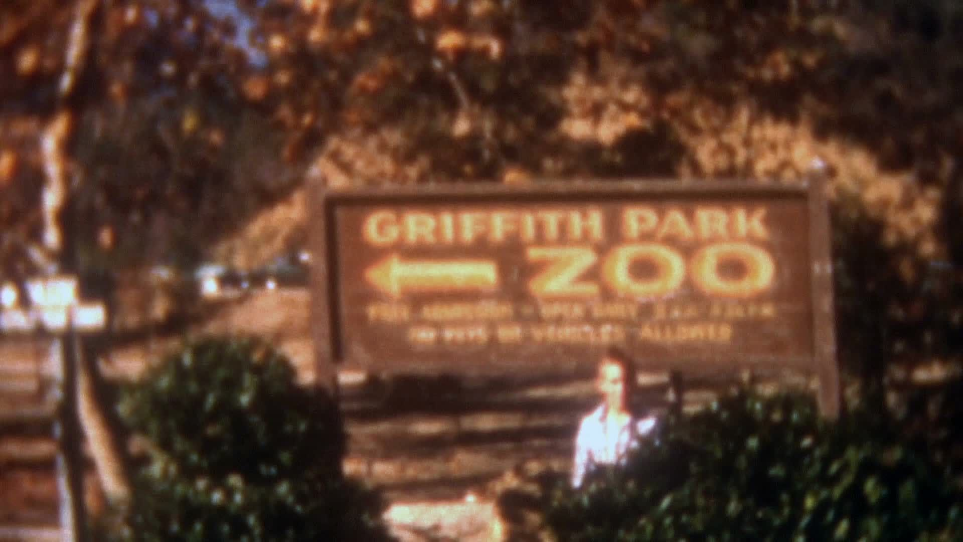 Old Vintage Film 1950s Old La Zoo Griffith Park Sea Lion Birds Animals Sign Stock Footage Zoo Griffith Park La Vintage Film Griffith Park Pet Signs