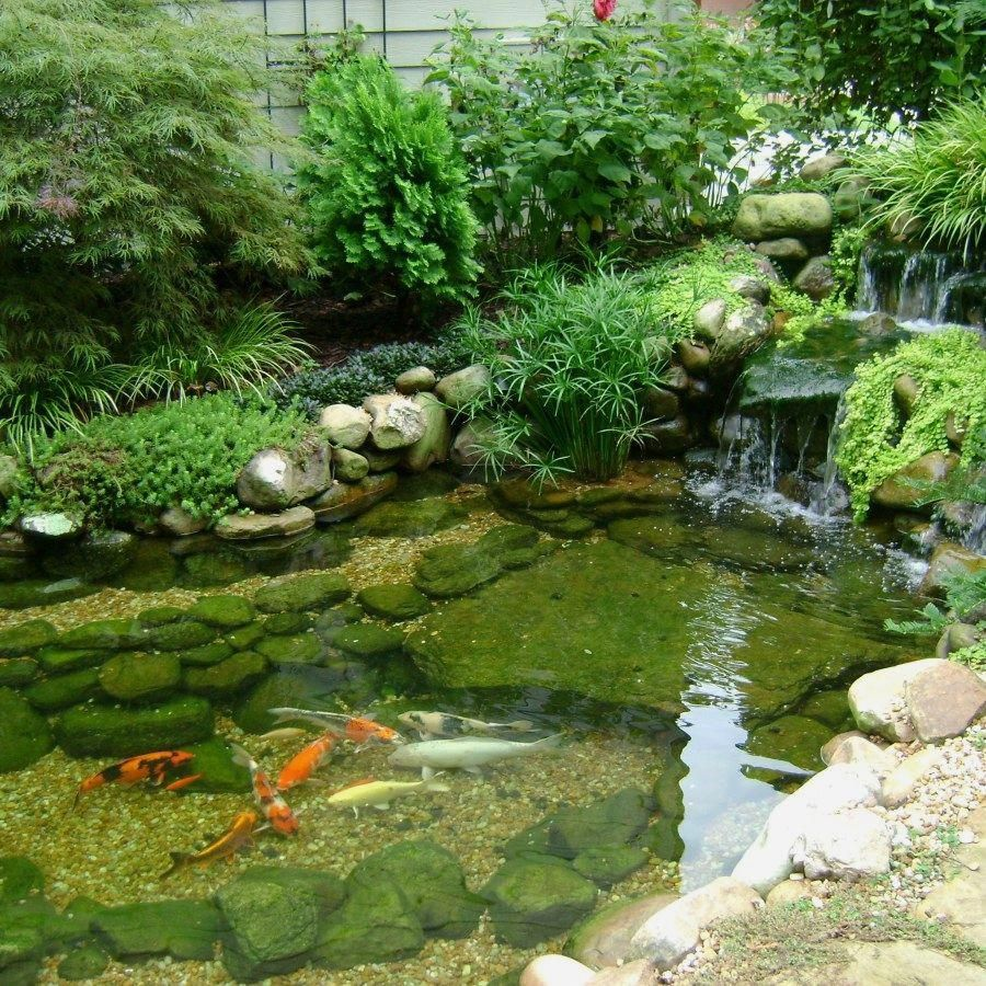 Koi Fish Ponds (With Images)