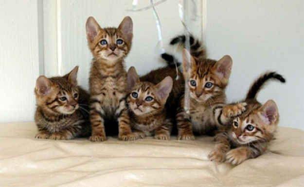 Cat Family Portraits
