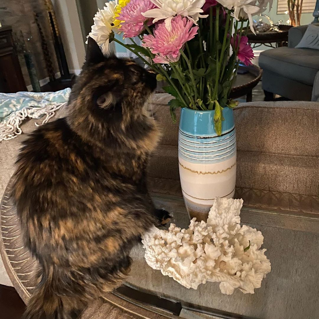 Shes checking out the flowers my honey bought me Instagram BridgeShes checking out the flowers my honey bought me