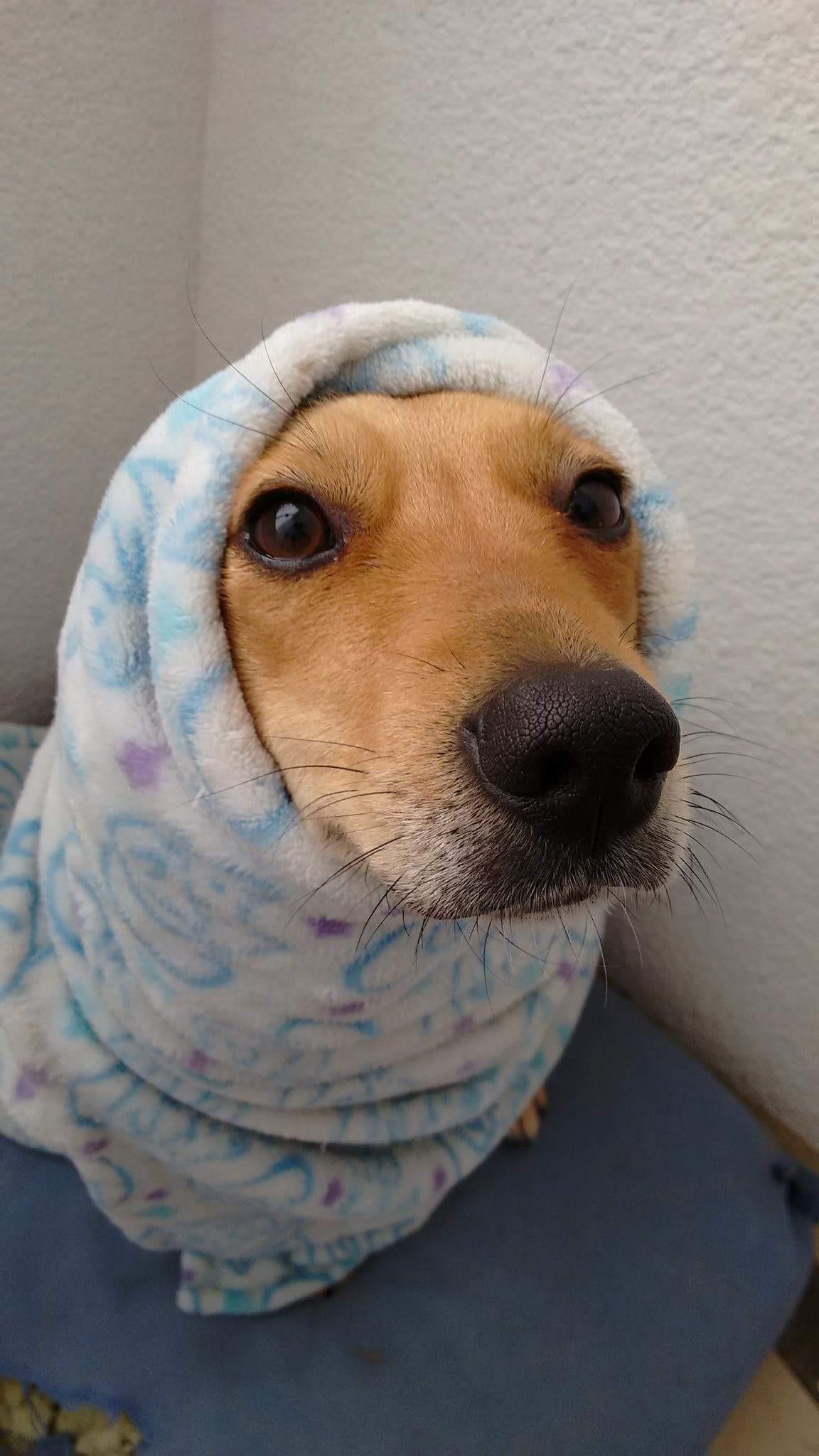 Es Hora De Ir A Misa Vamos A Misa A Rezar Por Mi Cojin Mordido La Lara La La Expertoanimal Mundoanimal Reinoanimal Animales Naturalez Pets Dog Cat Dogs