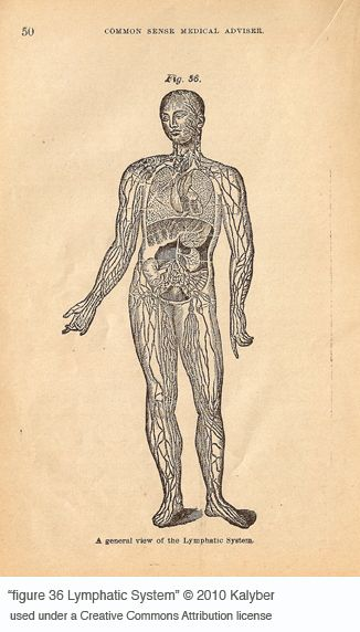 7 Way To Detox Your Lymphatic System Oh So Healthy