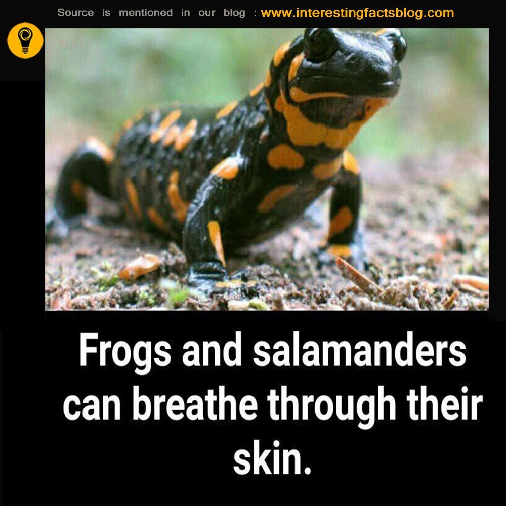 Salamanders And Frog Skin Breathing System Fun facts