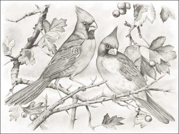 Cardinal pair | Bird coloring pages, Grayscale coloring ...