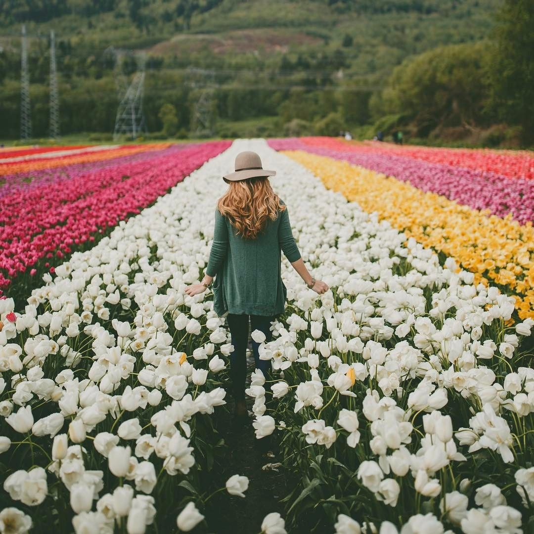 You Can Tiptoe Through The Tulips At The Abbotsford Tulip Festival Photo Rachelbarkman Via Instagram Nature Tulip Festival Tulip Fields