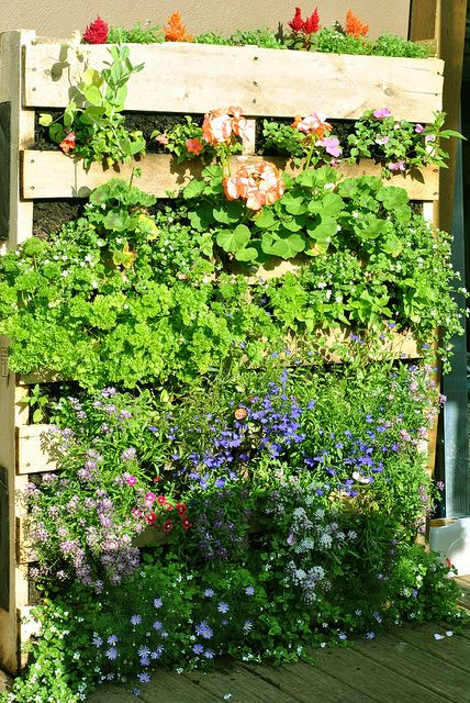 Diy Living Wall Made From An Old Pallet Upcycle Reuse Garden Green Pallet Skidgarden Pallet Garden Pallets Garden Herb Garden Pallet