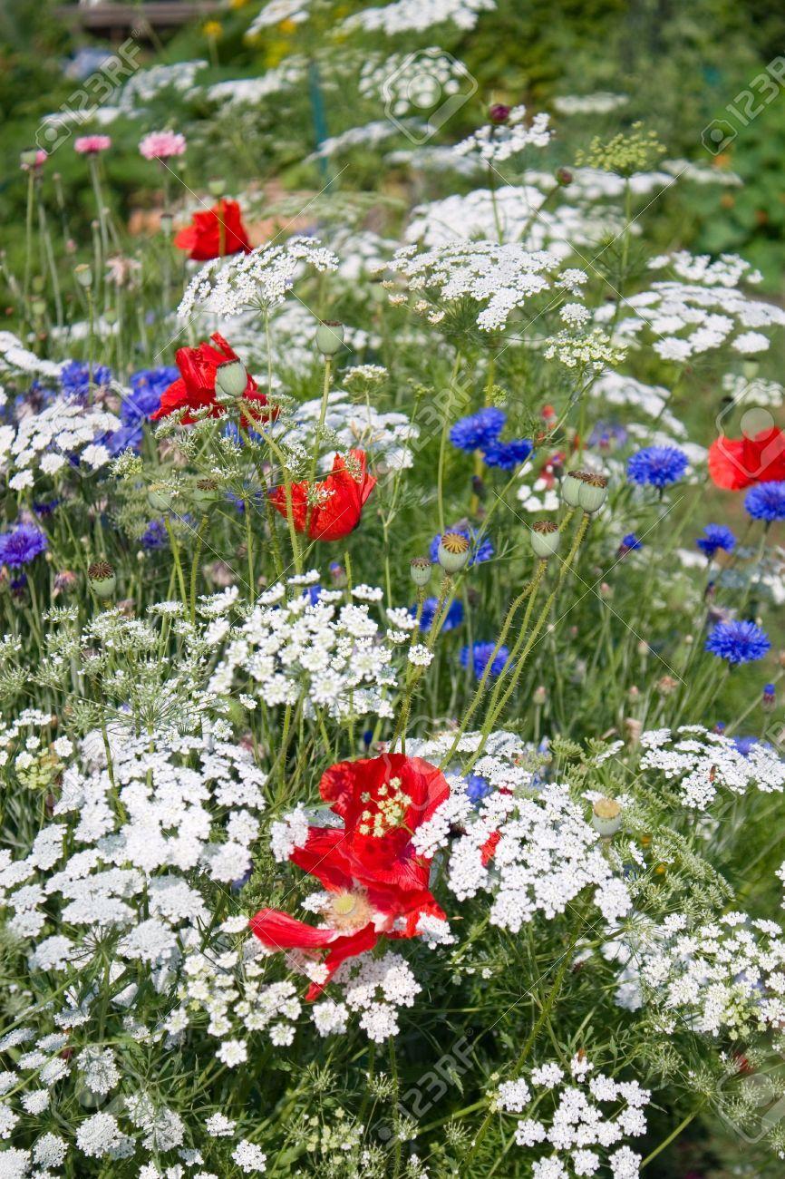 The patriotic flower garden with white queen annes lace red the patriotic flower garden with white queen annes lace red izmirmasajfo Gallery