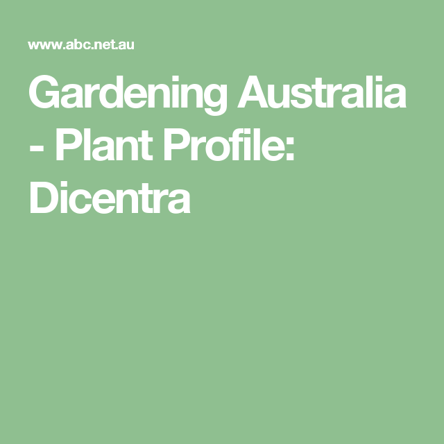 Dicentra Australia Facts Growing Strawberries Fruit Trees