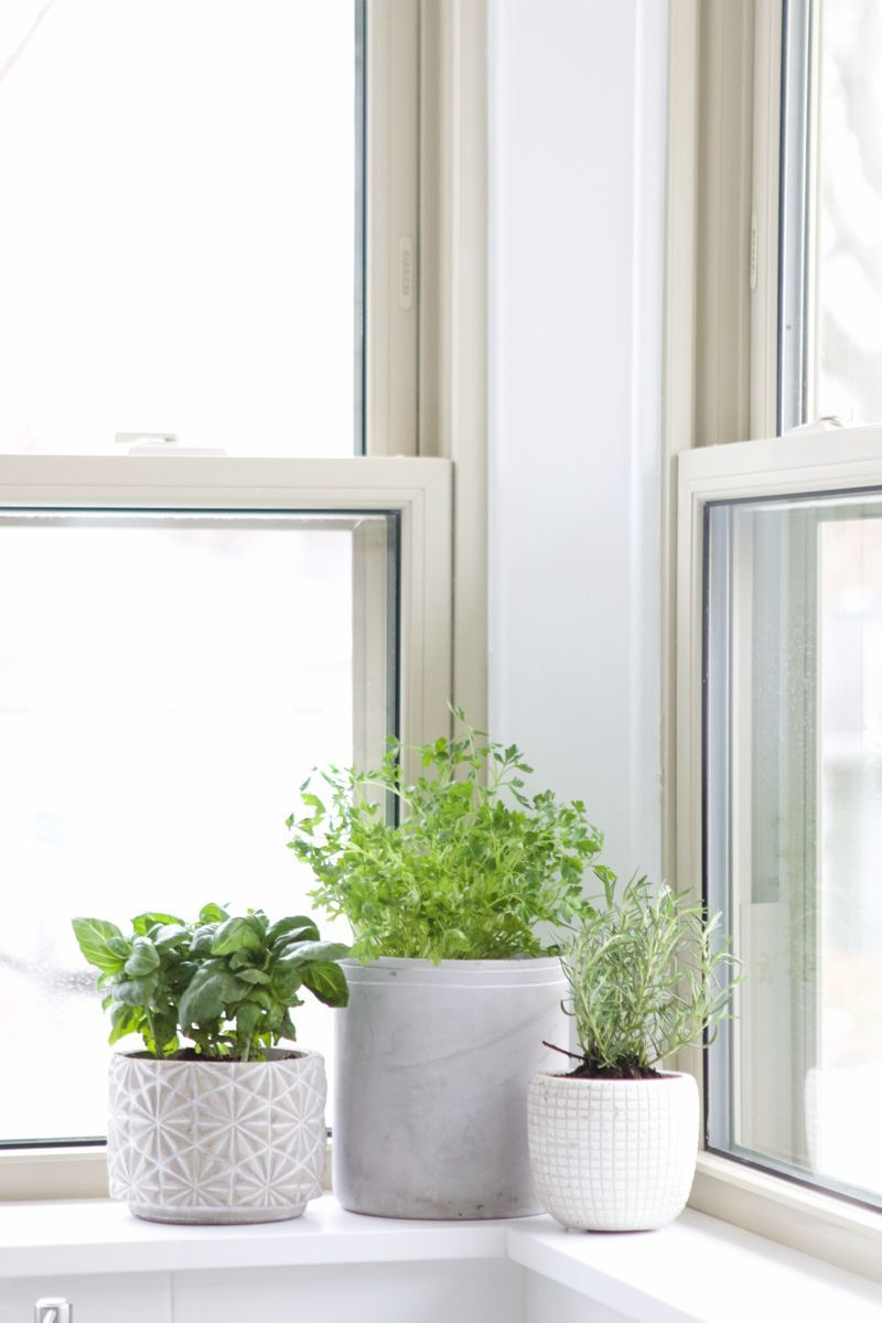 How To Create A Fresh Herb Garden | The DIY Playbook