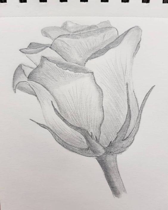 Drawing Dailydrawing Art Sketches Dailydrawing Drawing Nature Drawing Pencil Drawings Of Flowers Art Drawings Simple
