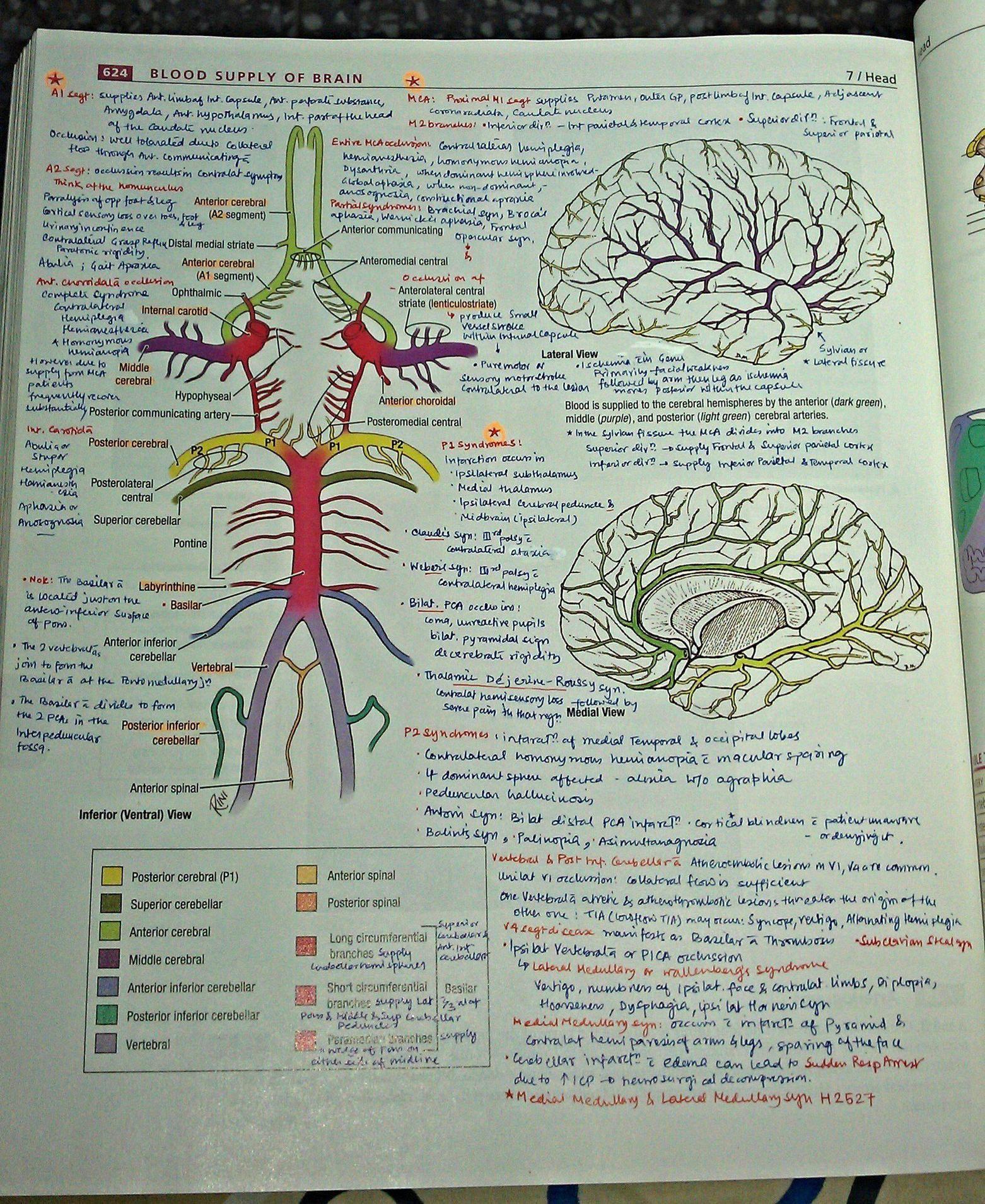 Pin de Katie Albert en write   Pinterest   Anatomía, Medicina y Apuntes