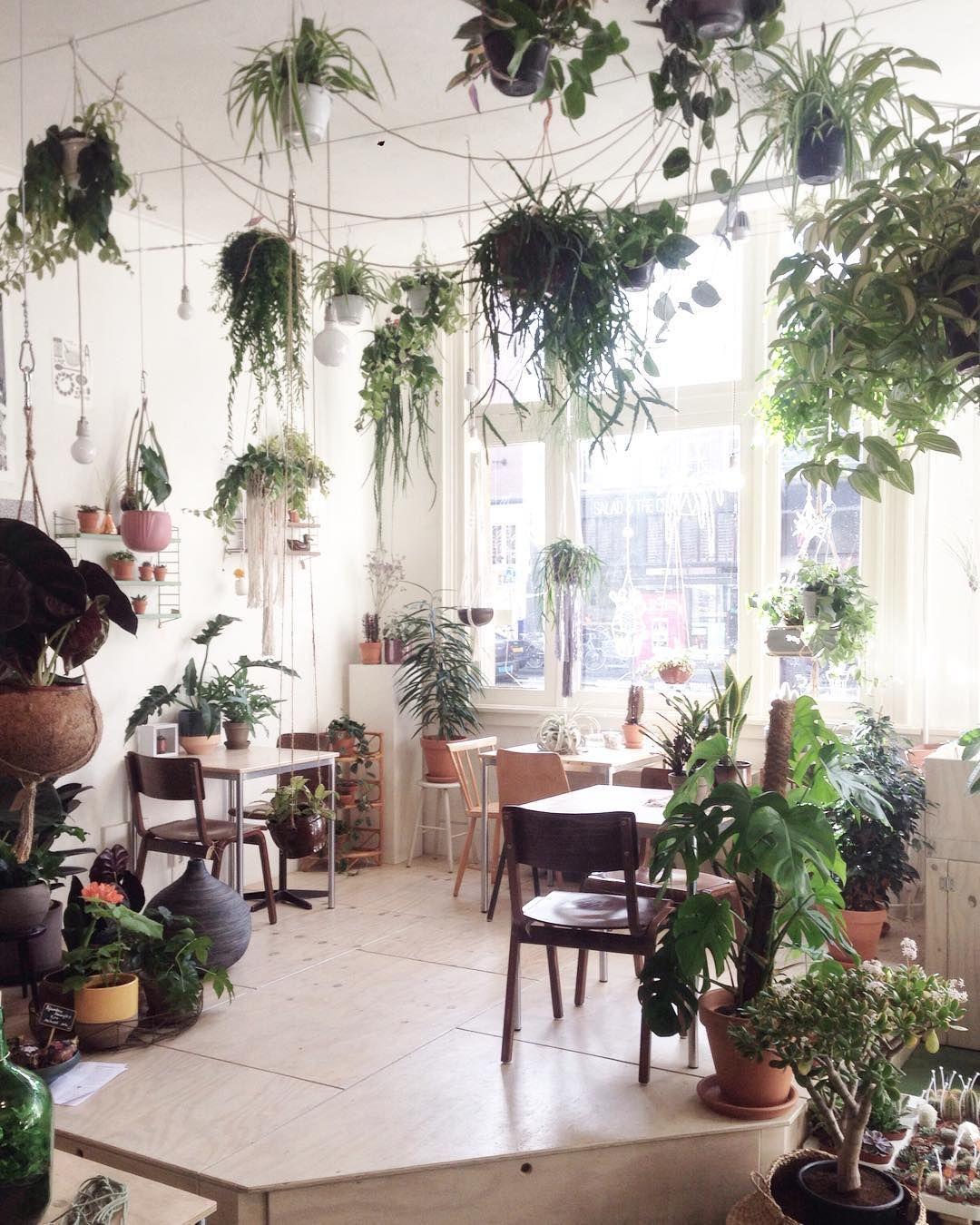 Pin von Tatiana Orbu auf Houseplants / Растения в интерьере ...