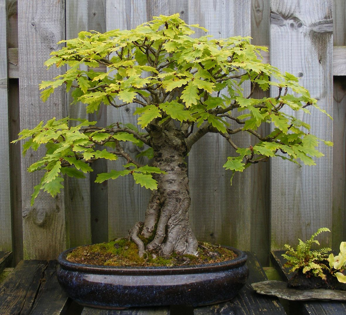 Josh Profile Garden Visit Bonsai Tree Types Bonsai Tree Bonsai Tree Care