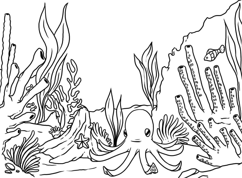 Molde De Algas Pesquisa Google Arrecifes De Coral Arrecife De Coral Mar Para Colorear
