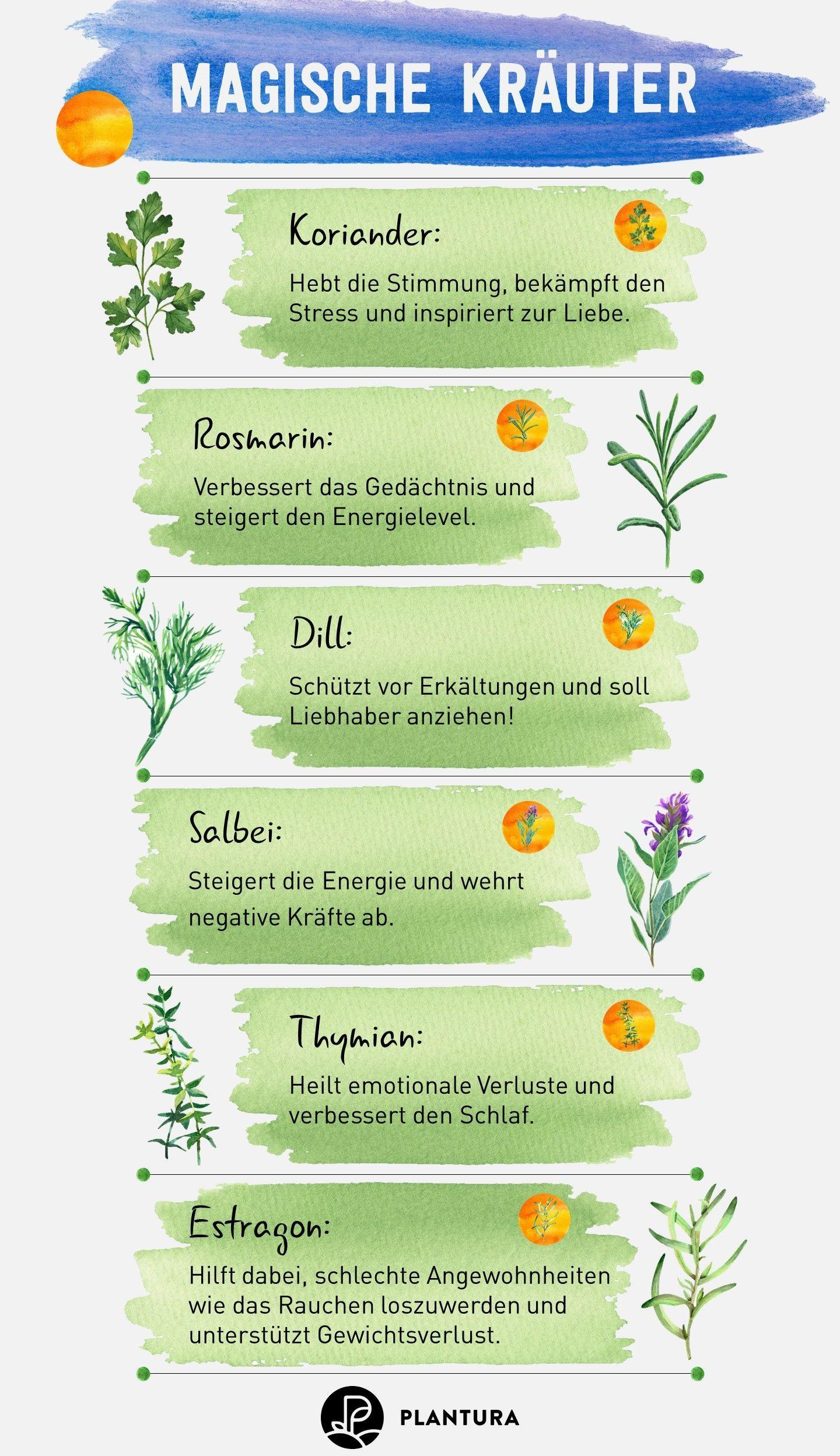 Die 10 besten Heilpflanzen aus dem eigenen Garten