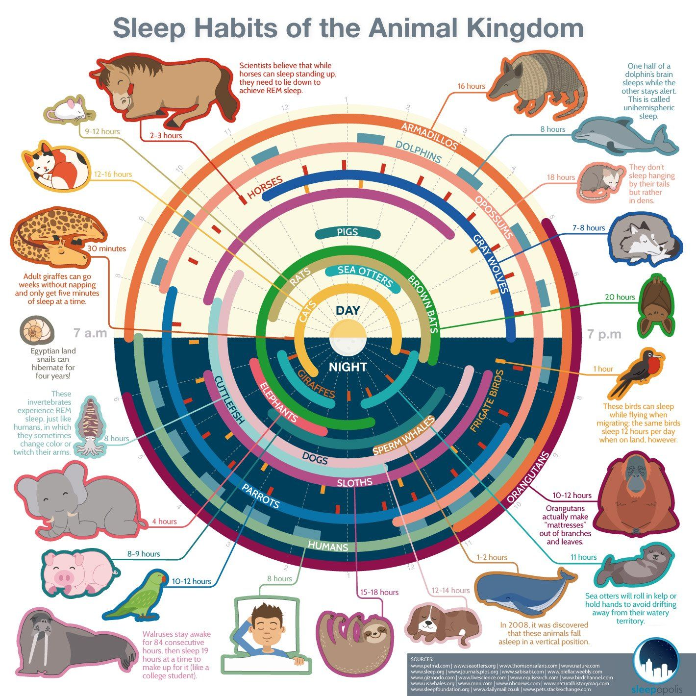 Sleep Habits of the Animal Kingdom #Infographic