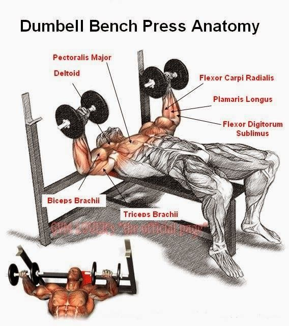 Peak Fat Loss Fitness Dumbbell Bench Press Chest Training Pinterest Gym And Yoga