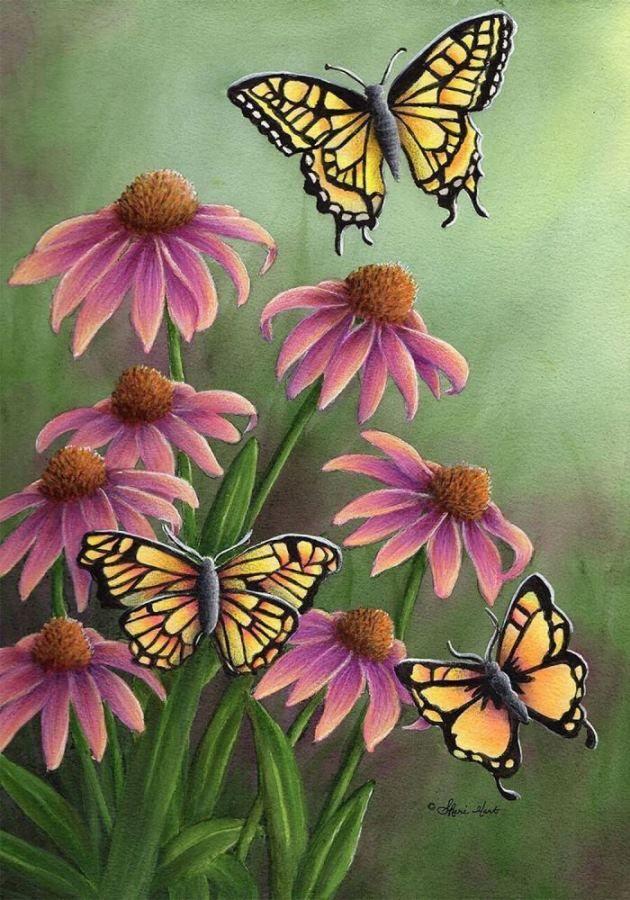 echinacea butterfly- S Hart 630 x 900