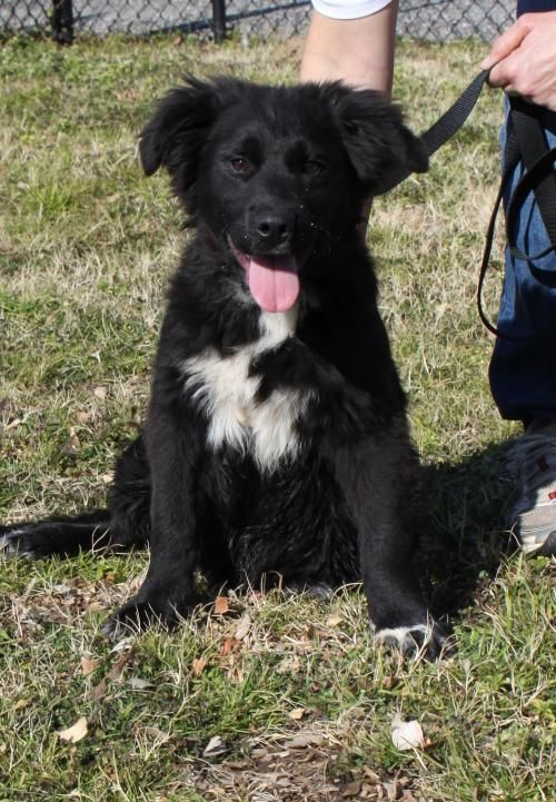 Adopt Snoop On Dogs Dog Adoption Flat Coated Retriever