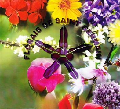 Saint Germain – Free Lecture & Workshop – Land of Reiki & Aroma