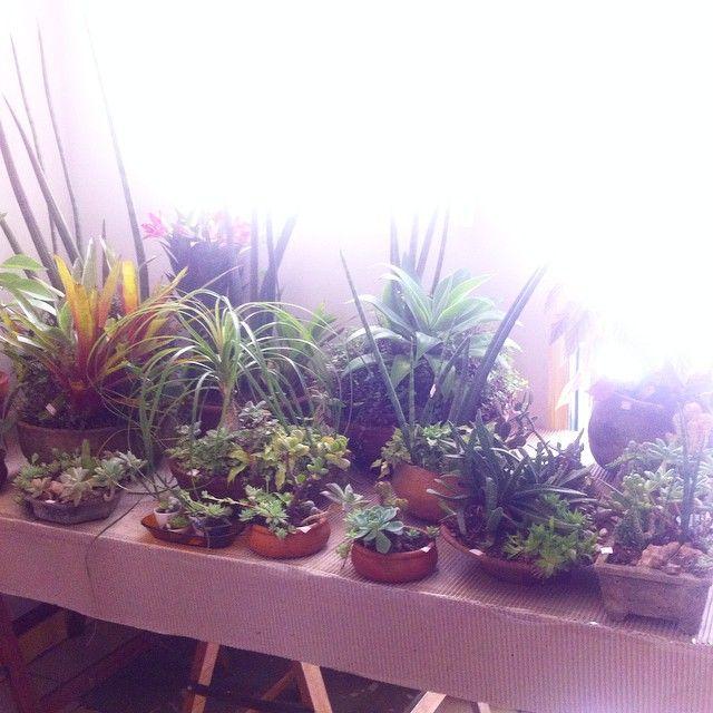 De todos os tipos para decoração e boas energias aqui no evento Casa Natural, no Santa Tereza #home #decor #green #plants