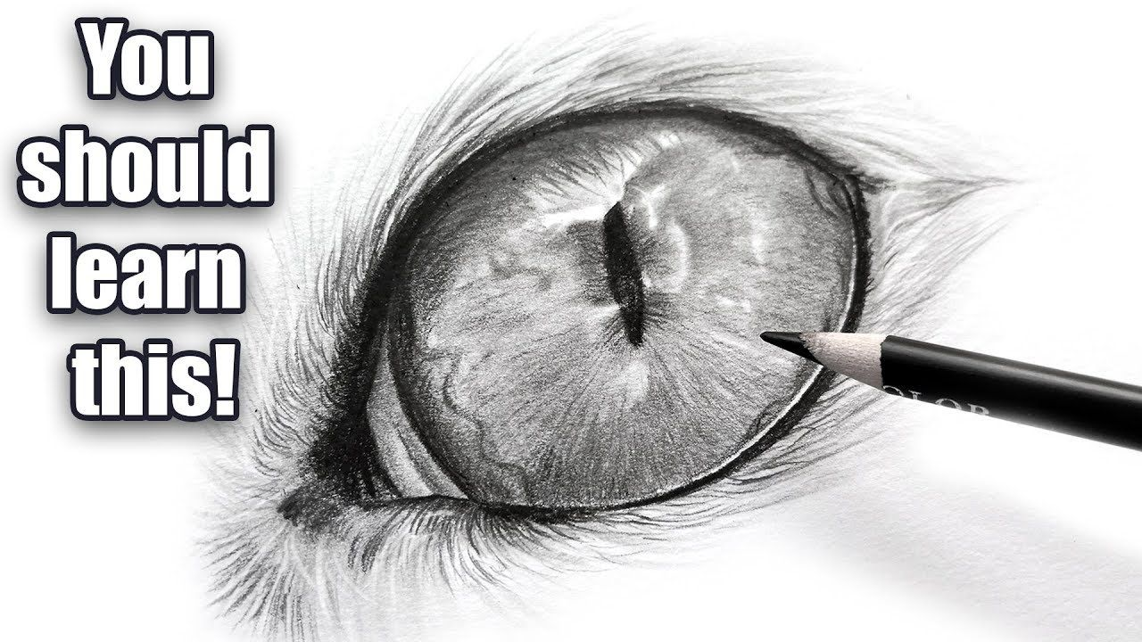The importance of black and white Cat eye drawing
