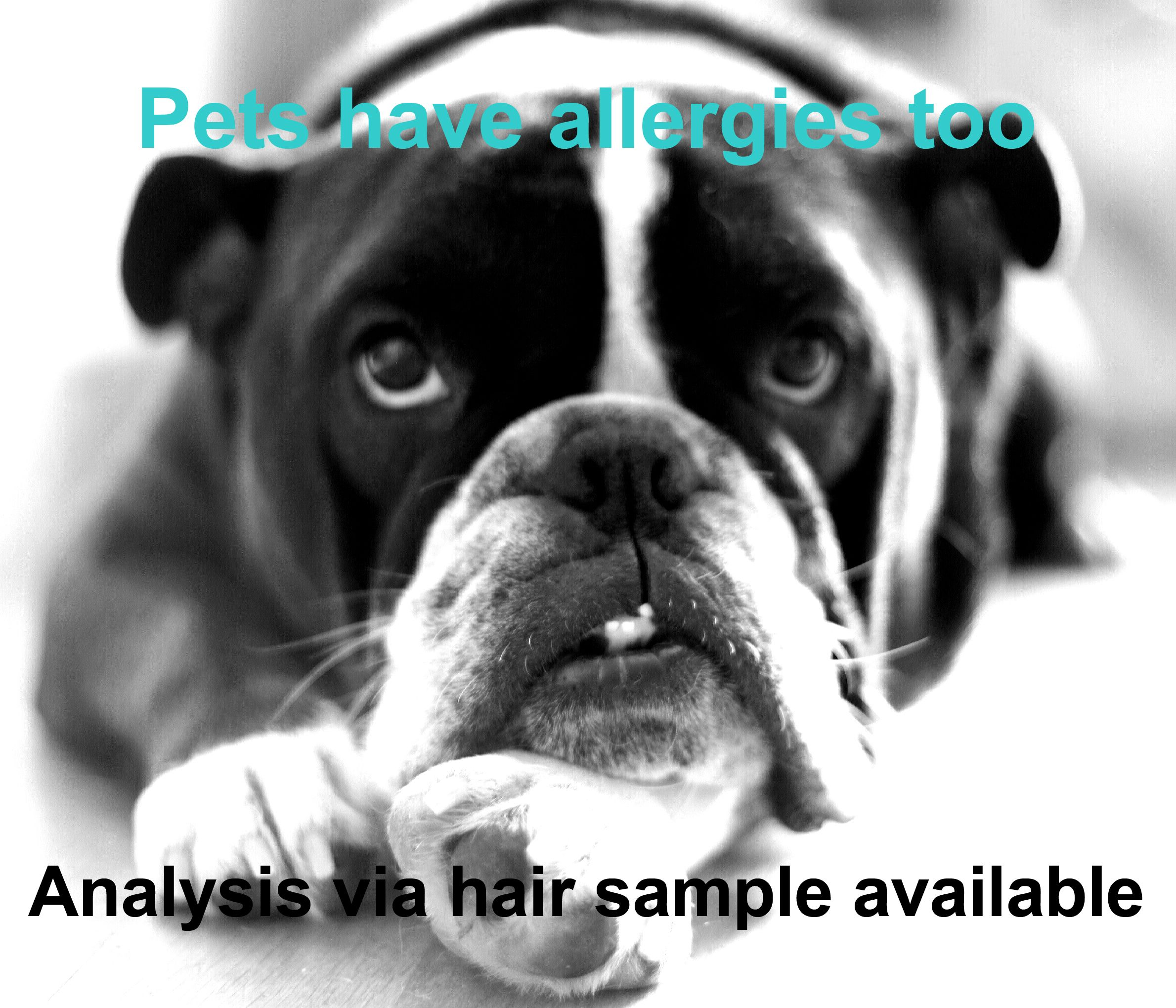 Pin by Andy Manning on Dogs and Products | Pinterest | Pet products ... | Dog Food Allergy Test Saliva