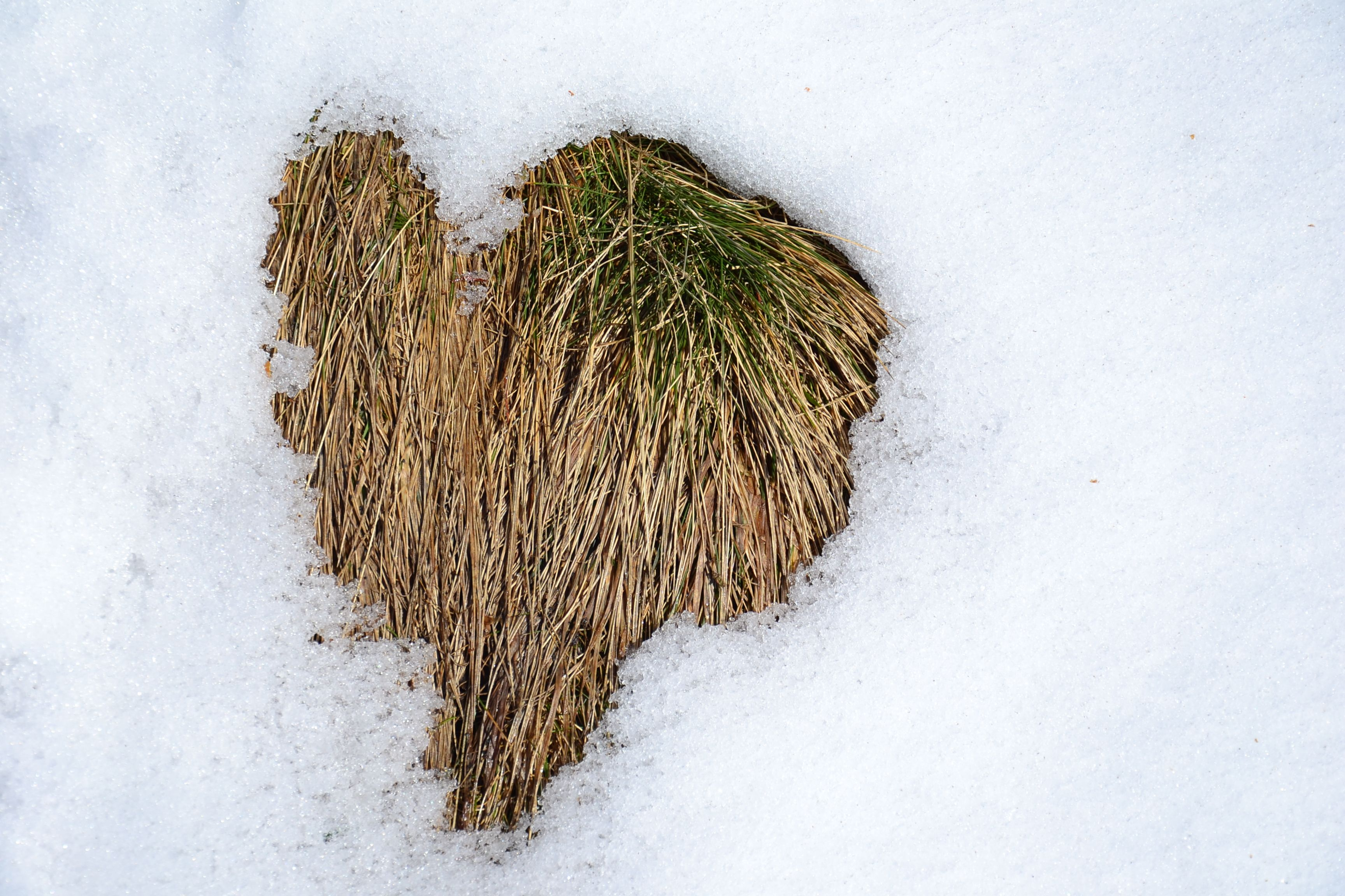 #Snow in #love!!  @M. Cervelli
