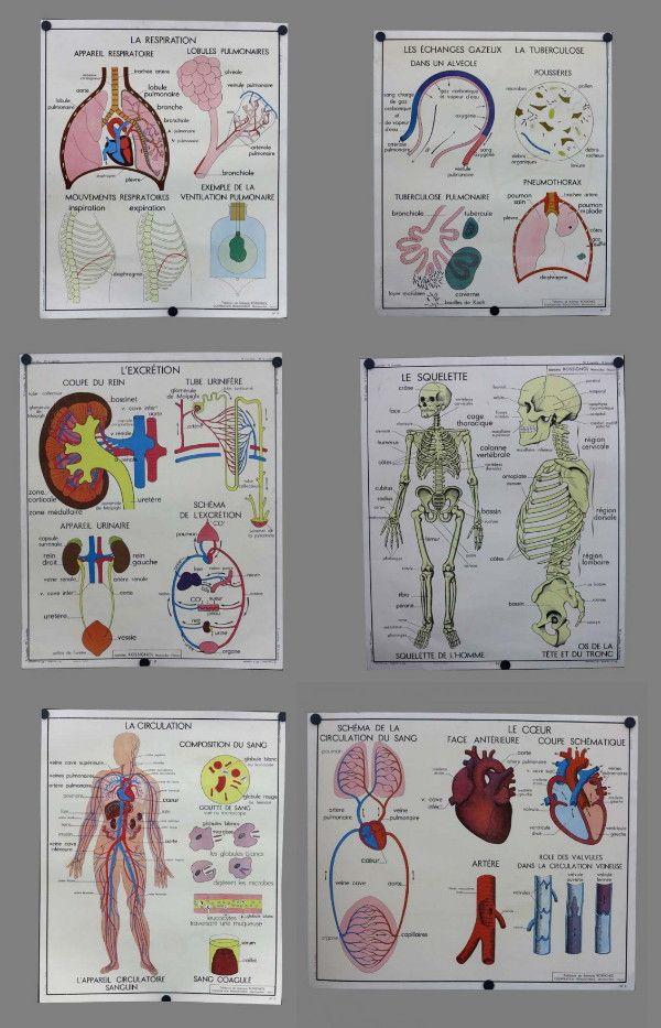 wunderkammer *: Dekorieren mit alten anatomische Lehrtafeln ...