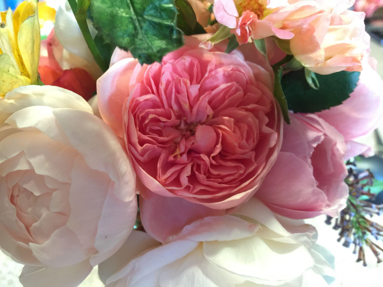 Boscobel Springs To Life South Florida Rose Flowers Greenery English Roses David Austin Roses Rose