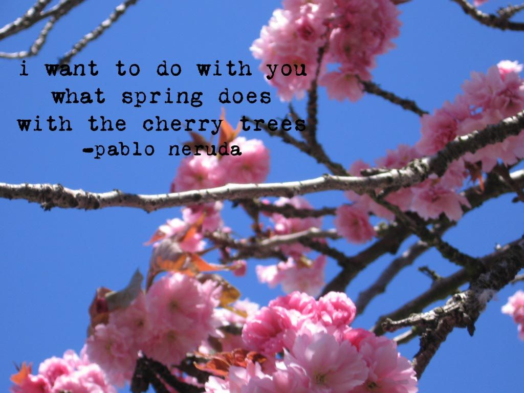 Cherry Blossom Photo with Pablo Neruda Quote