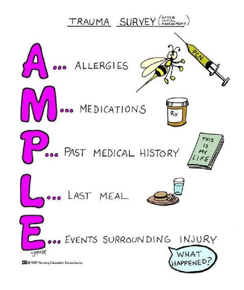 Trauma Survey Mnemonic (AMPLE)   Veterinary Medicine