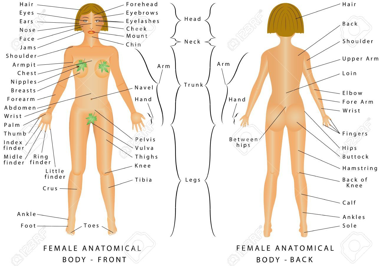 Female Human Anatomy Pictures Human Anatomy Drawing Pinterest