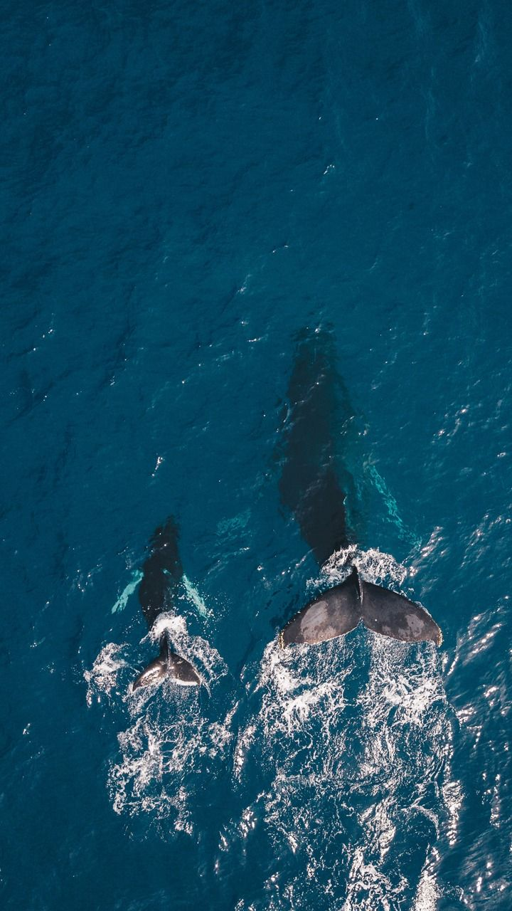 Whale watching in the Azores is a unique opportunity to get up close to whales and dolphins in the wild. Learn from marine biologists and appreciate nature.