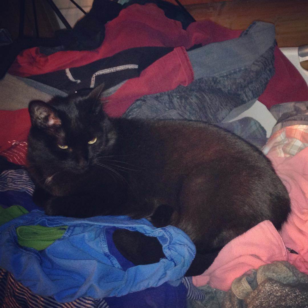 #jackblackthecat likes preparing aka wrinkling the clean laundry for folding. #blackcatattack #blackcatsofinstagram #jelliclecat #catsrunmylife #kellyandellisathome #juvies