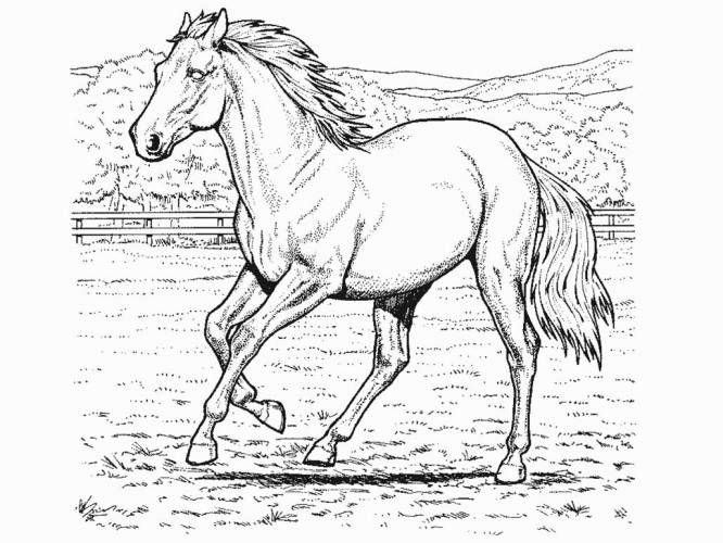 Realistic Coloring Pages: Free Horse Coloring Pages Printable ...
