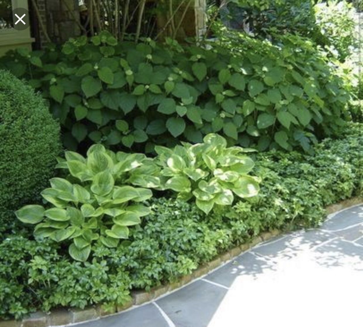 Hydrangea And Hosta Bed Shade Garden Design Shade Garden Boxwood Landscaping