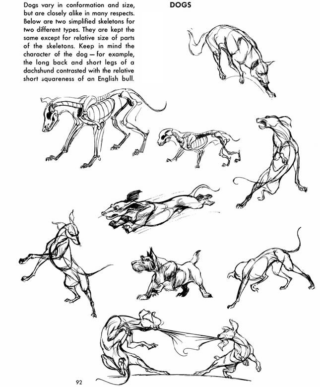 From: The Art of Animal Drawing: Construction, Action