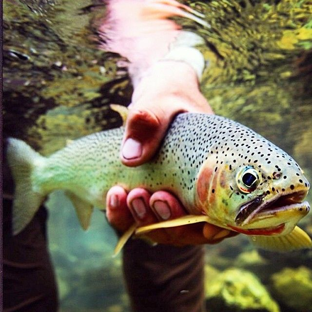 Fly Fishing Trout Trout Fishing Tips Fish Trout Fishing