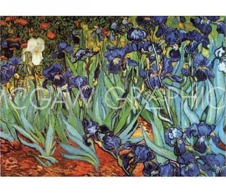 poster iris van gogh - Google Search