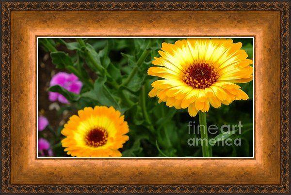 Sunny Day Framed Print By Chandra Nyleen