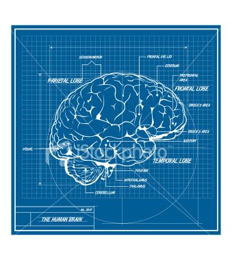 brain by design Infographs Pinterest Infographics and Data - fresh blueprint 2 cover